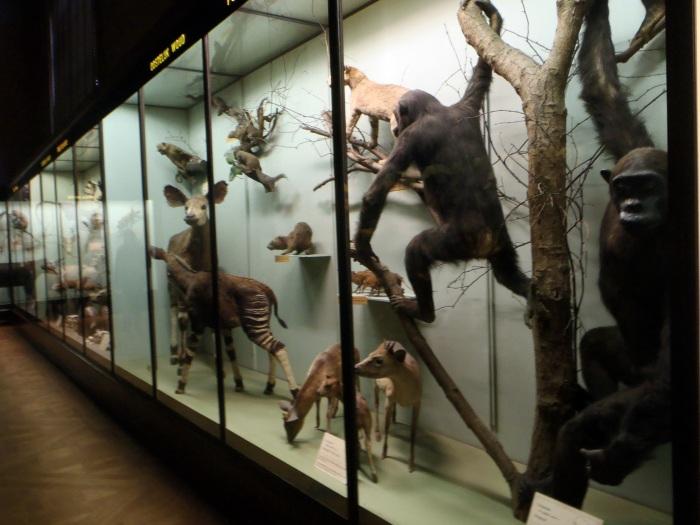 Musée royal de l'Afrique centrale Bruselas
