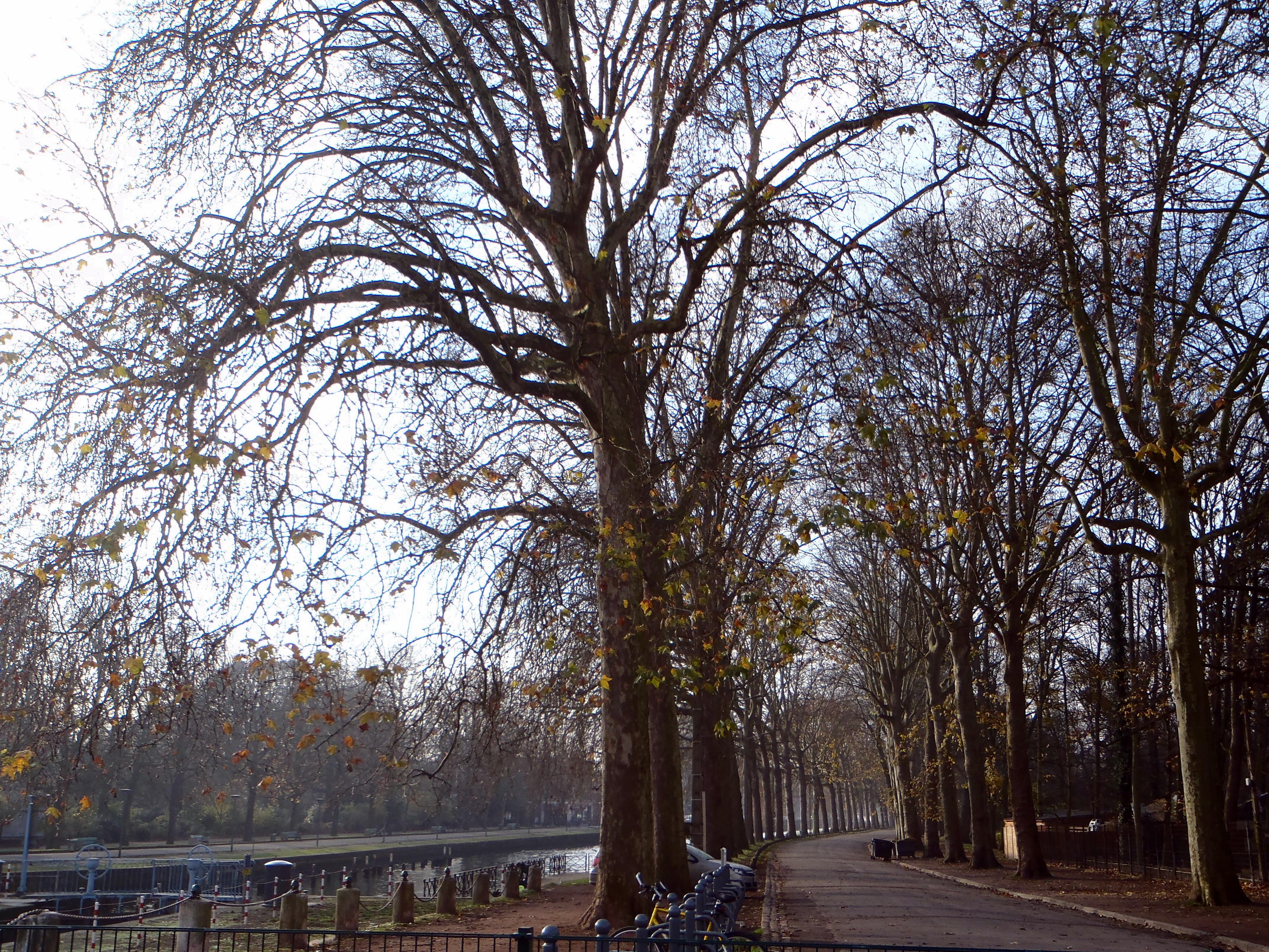 Citadelle en Lille