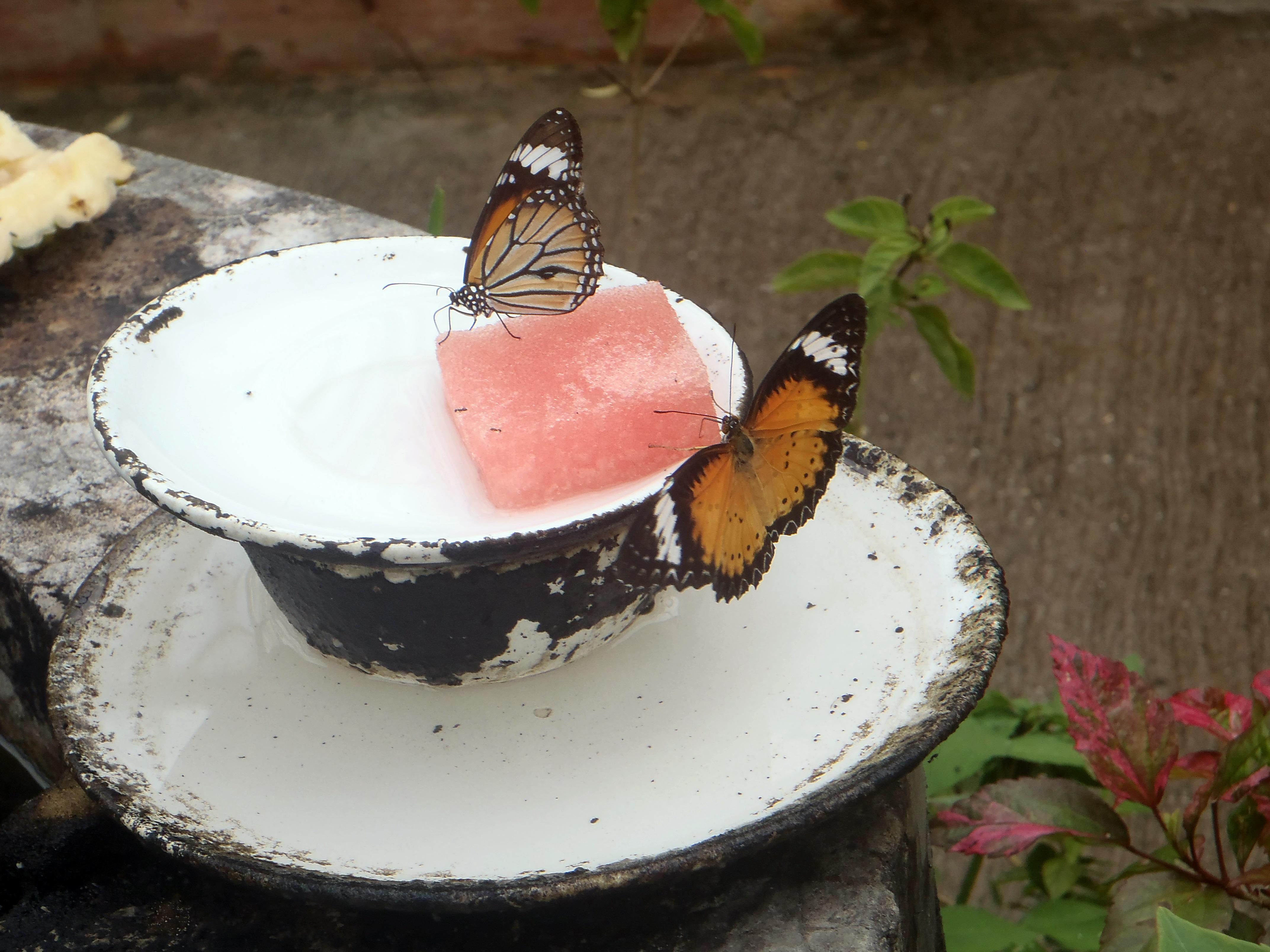 Restaurante de las Orquídeas - Bai Orchid-Butterfly Farm